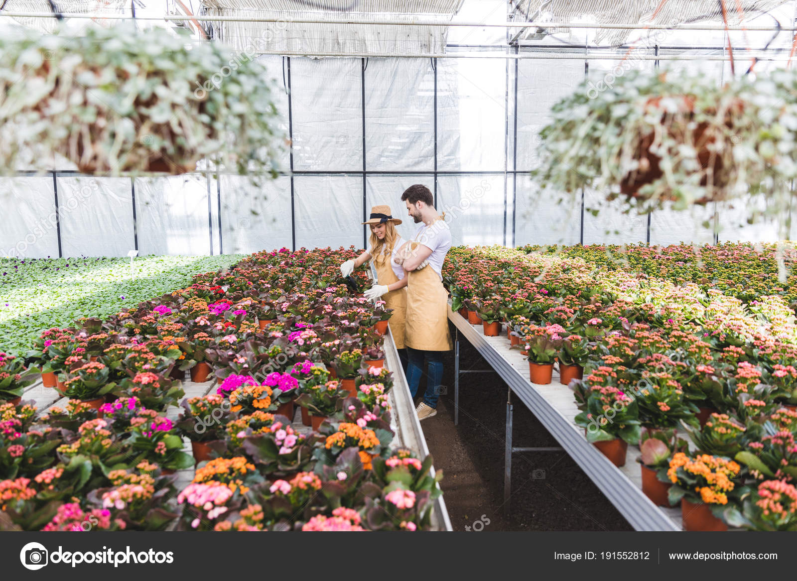 Couple Gardeners Arranging Pots Flowers Greenhouse Stock Photo