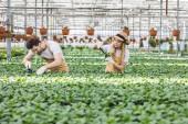 Mosolygó kertészek ültetés virágok, az üvegházhatást okozó