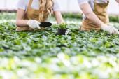 Close-Up Nézd kertészek, ásó telepítési virágok óvoda