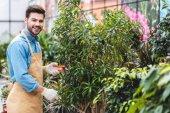 Pohledný muž řezání zelené rostliny ve skleníku