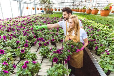Couple of gardeners arranging pots with flowers in greenhouse