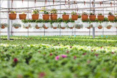 Pots with blooming flowers and plants in greenhouse