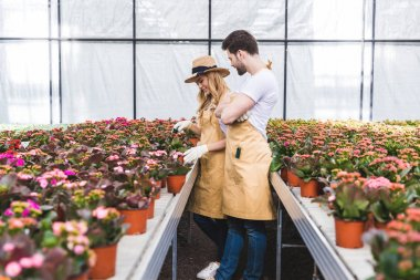 Couple of gardeners in gloves working in greenhouse with flowers