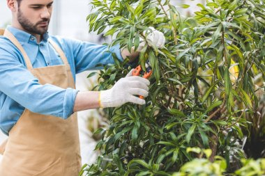 Handsome gardener cutting green tree in greenhouse