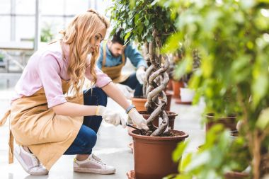 Smiling woman with shovel planting ficus by male gardener in greenhouse