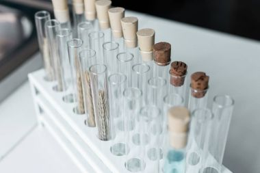 Test tubes in chemical laboratory