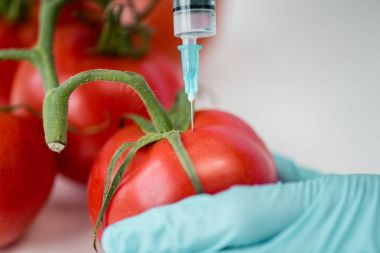 Scientist with syringe and tomatoes