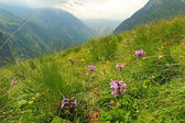 Photo View from the Caucasus mountains on