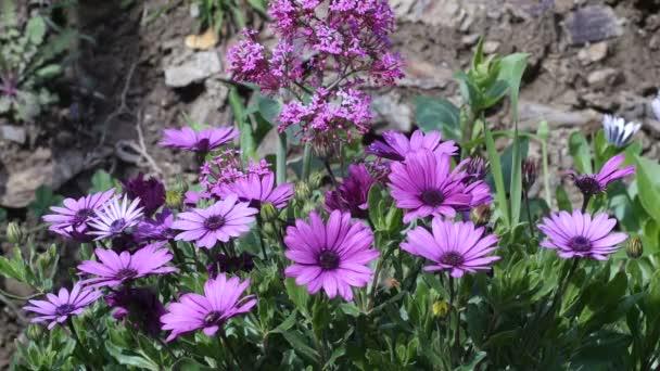 Detailní pohled fialové květy