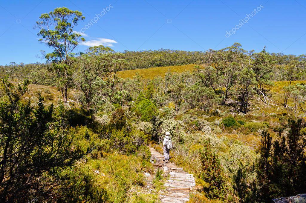 Scenic bushwalk - Cradle Mountain