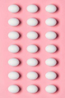 rows of white eggs