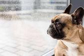 Photo dog looking at window