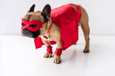dog in superhero costume