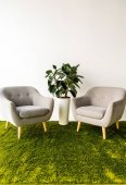 grüne Pflanze zwischen zwei Sesseln