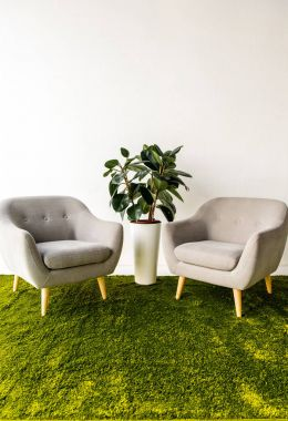Green plant between two armchairs