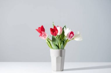 beautiful blooming white, pink and red tulips in vase on grey