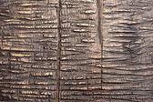 Detailní záběr popraskané dřevěný materiál textury