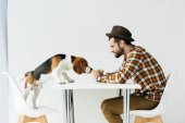Fotografie Seitenansicht der Hund schnüffeln Essen in der Hand des Menschen