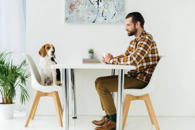side view of businessman sitting at table and looking at cute beagle