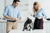 Fotografie Mann und Frau Kaffee trinken und Ernährung französische Bulldogge auf Küchentisch