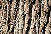 Texturou kůry hrubé hnědé strom