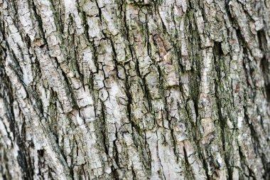 Texture of rough tree trunk bark stock vector