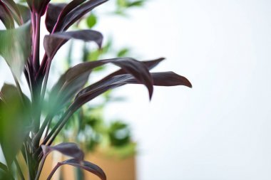 close up view of houseplant with long leaves and blurred background