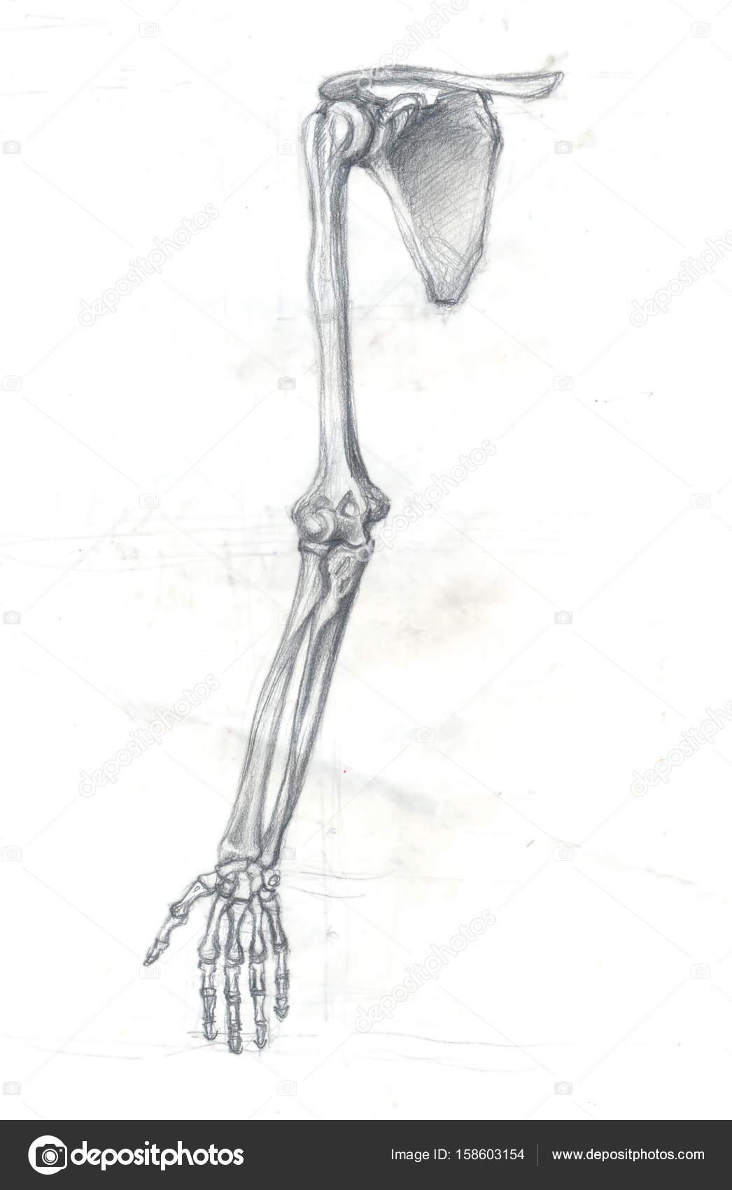 huesos del brazo — Foto de stock © richcat #158603154