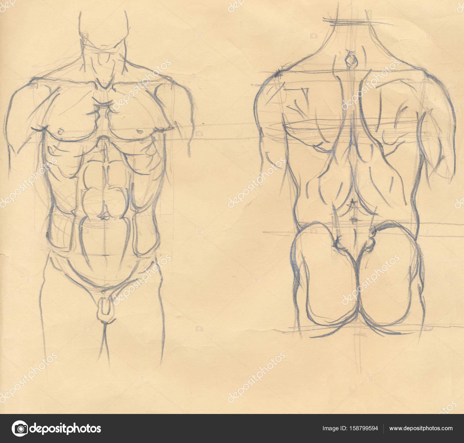 bocetos de torso humano — Fotos de Stock © richcat #158799594