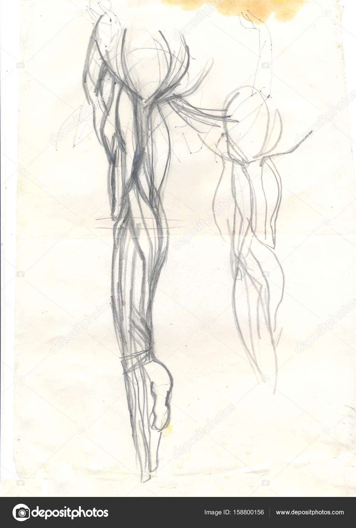 músculos de brazo lateral — Foto de stock © richcat #158800156