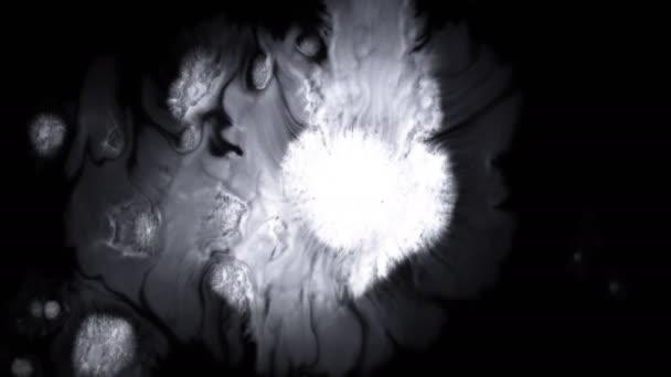 Krásná bílá akvarel je na černém pozadí, krvácí do barev Bloom, se zvětšováním organického toku, se rozprostíná na čistém pozadí. Ideální pro pohybovou grafiku, digitální kompozice