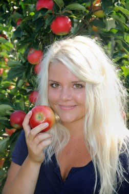 Blond young woman at apple harvest in Kivik, Scania, Sweden