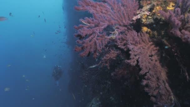 Scuba diver at Mediterranean Reef wall full of Gorgonians