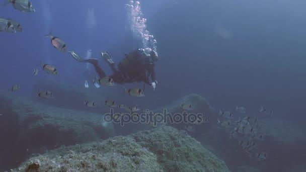 Scuba Diver in beautiful Mediterranean Reef landscape
