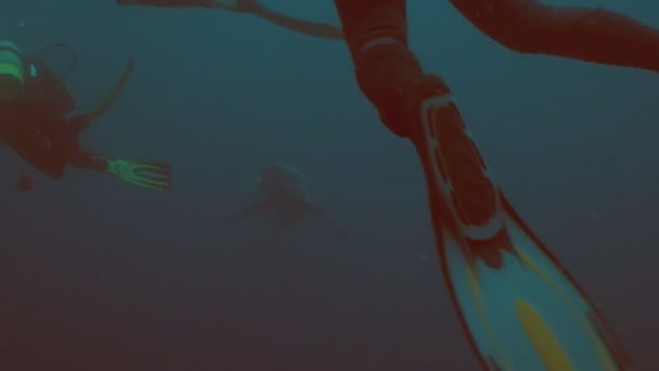 Huge Shark with fishing hook swims closely to divers, underwater shot, South Africa