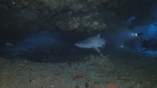 Group of Sharks in under water cave, some divers in the background, South  Africa