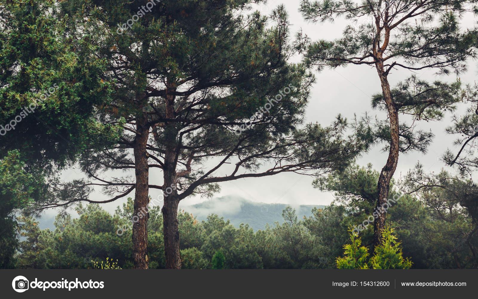 Bergrücken in einem Rahmen von Bäumen in Foregroundin bewölktem ...