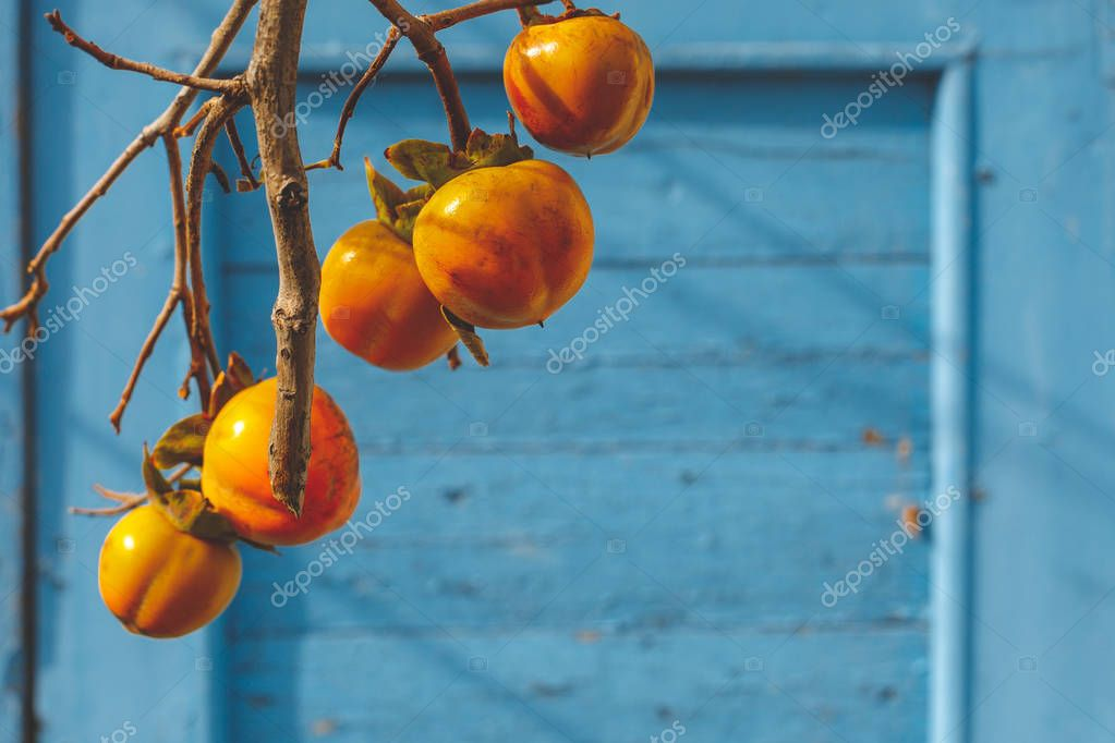 Orange Persimmon Ripens On A Tree In Autumn On A Blue Wooden Background
