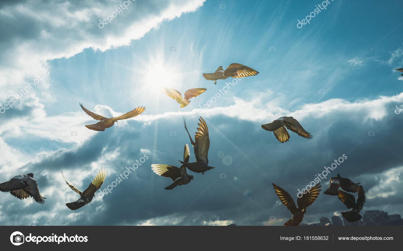 Parvada Palomas Volando Cielo Azul Frente Paz Libertad Domingo
