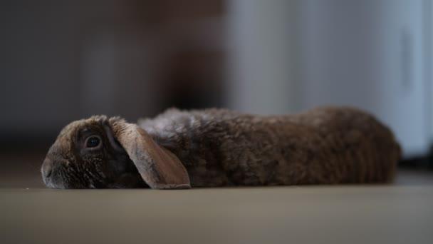 rabbit easter on floor