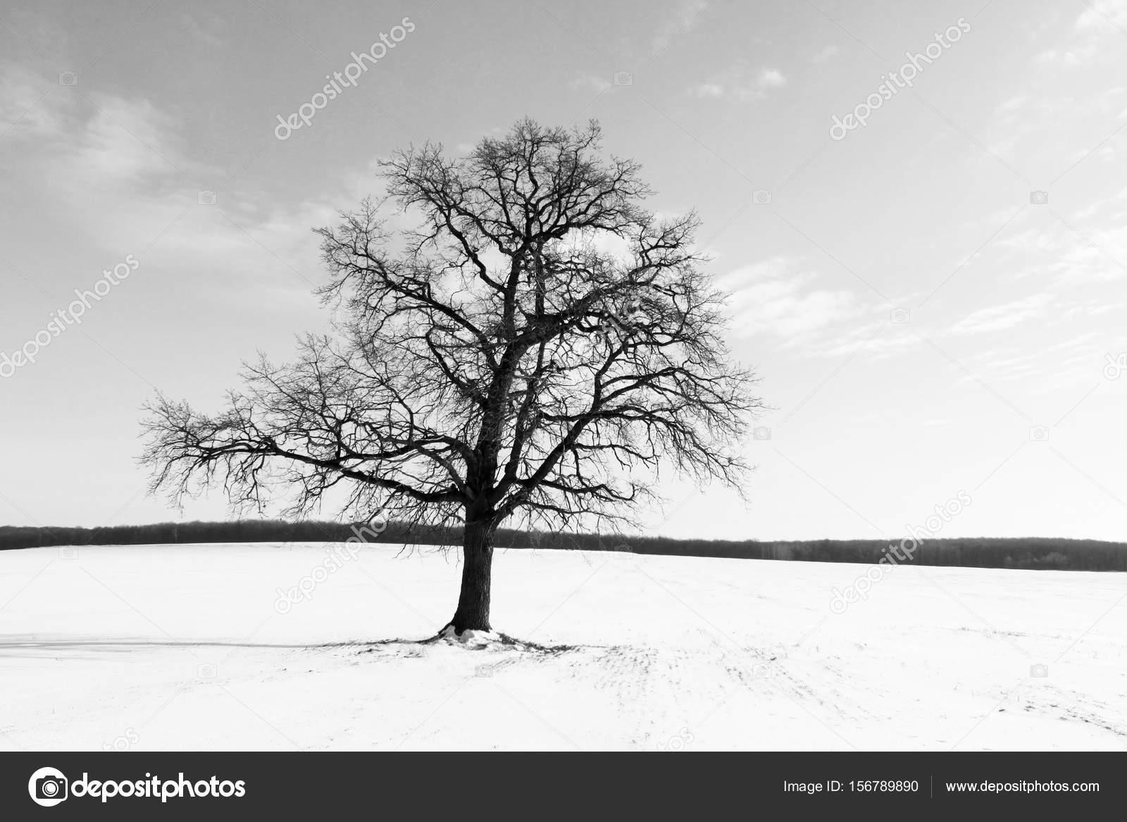 Bianco E Nero Paesaggio Con Albero Nero Su Sfondo Di Cielo E Bianco