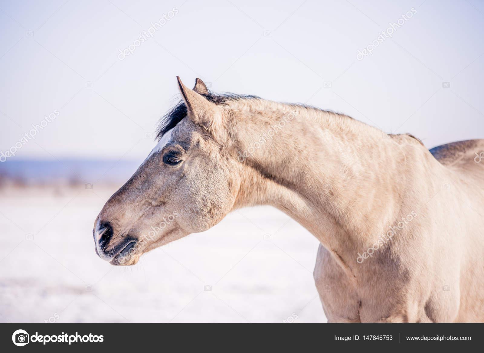 Kostenlose Schones Pferd Geniesst Sonne Und Schnee Im Winter