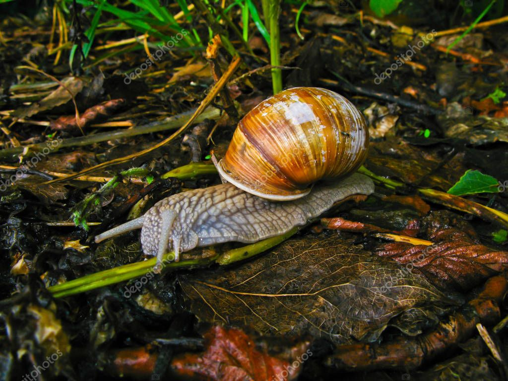 snail with house on the ground