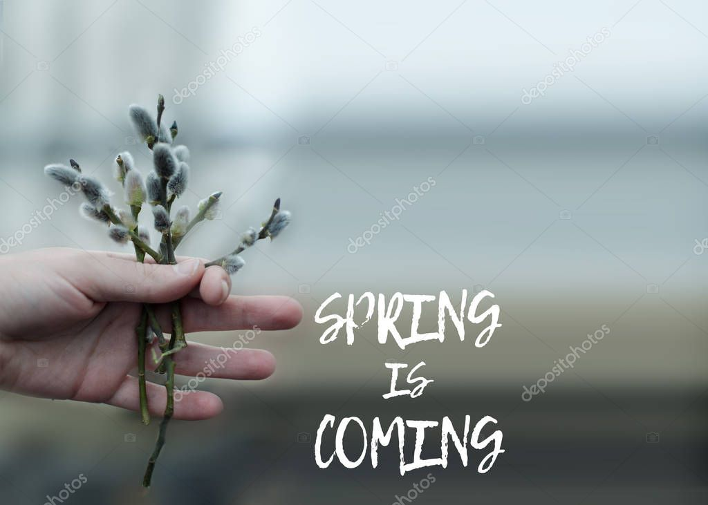 Spring background of willow branches in hand