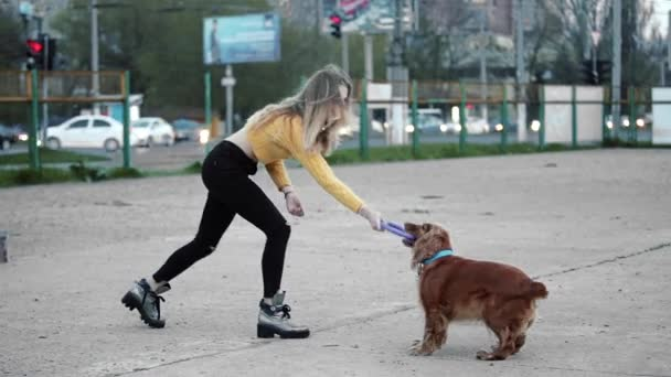Blonde woman and dog cocker spaniel. She teases, plays, laughs. Overall plan. Happy.