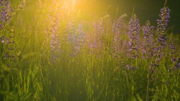 Warm summer sun light shining through wild grass field
