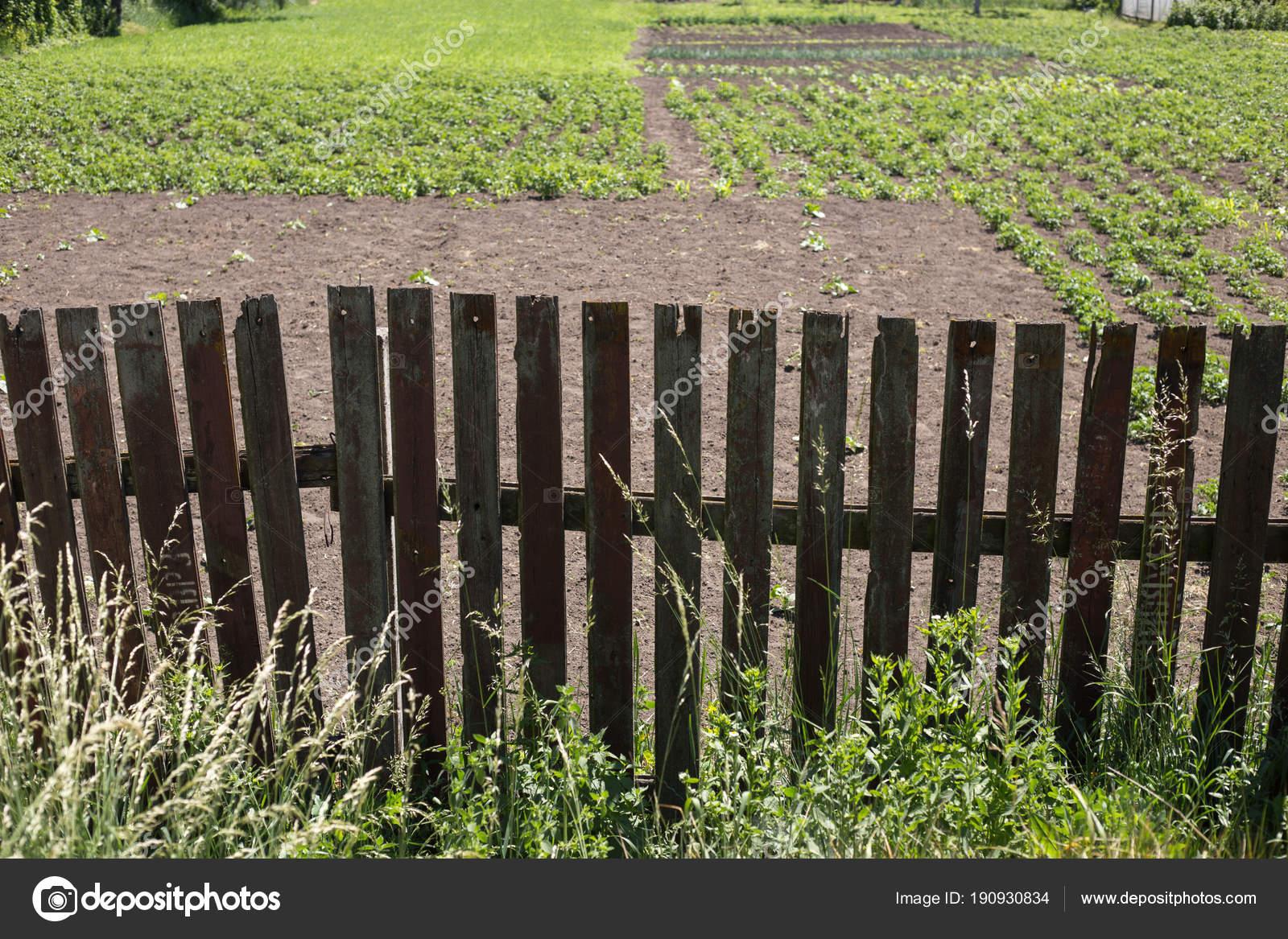 Clôture en bois osier, jardin potager — Photographie ...