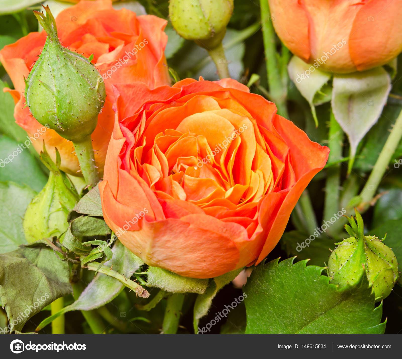 Flores De Rosas Naranjas Close Up Bouquet Arreglos