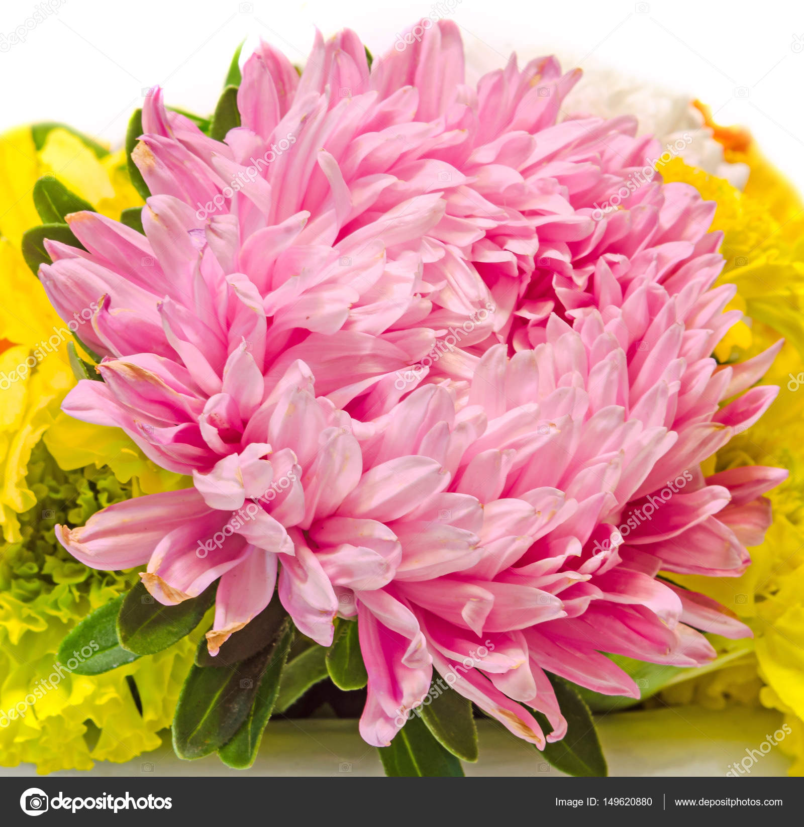 Pink purple colored chrysanthemum flowers bouquet close up pink purple colored chrysanthemum flowers bouquet close up stock photo izmirmasajfo