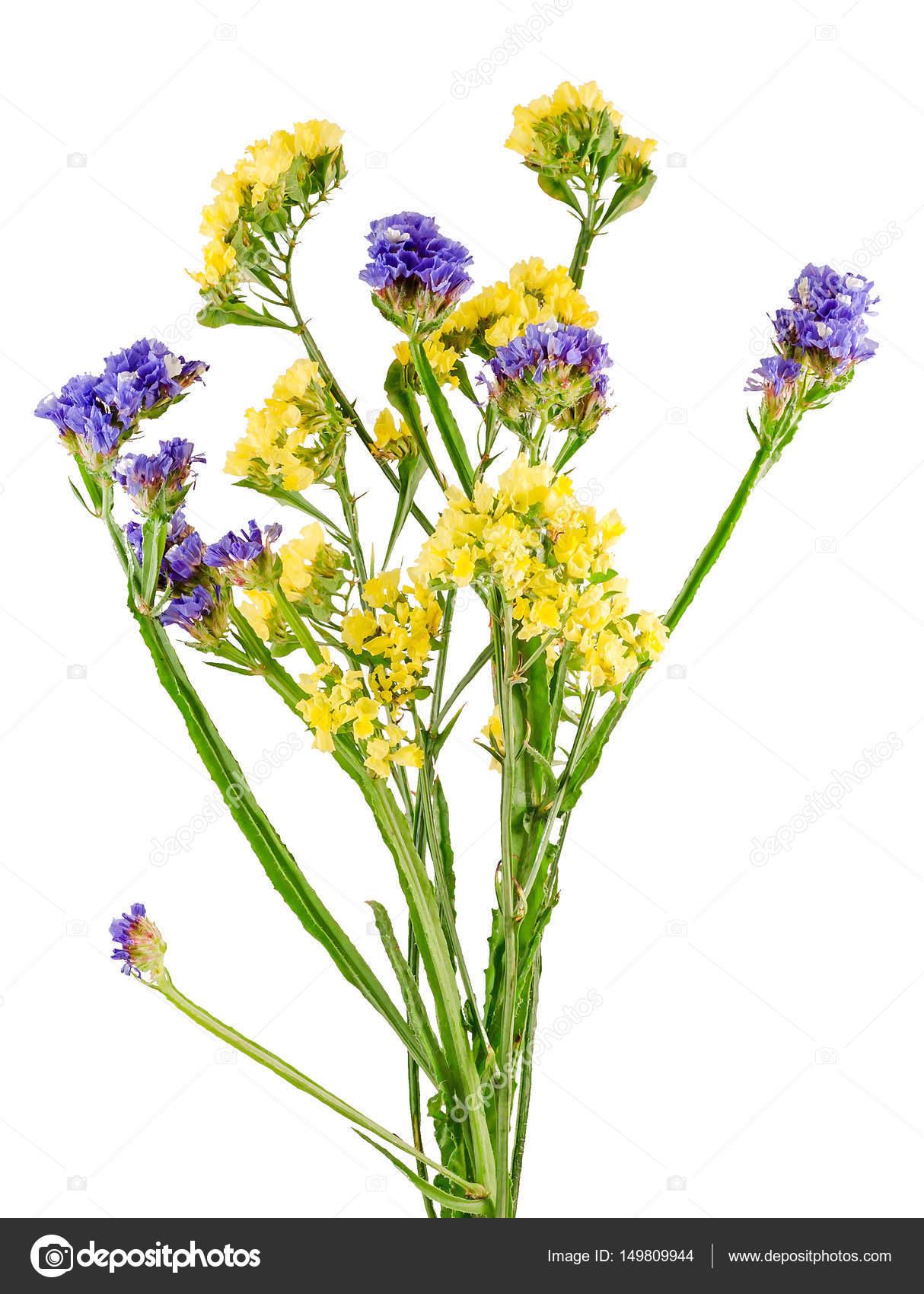 スターチス Sinuata ロイヤル花鮮やかな色の野生の花を閉じる